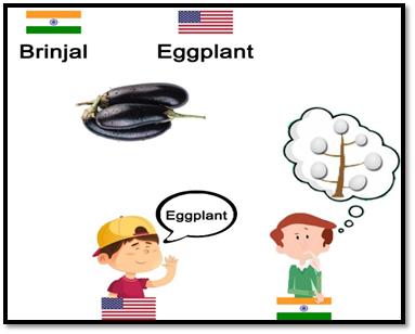 Brinjal Eggplant